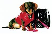 A pooch in H&M garb.