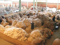 Alpaca is one of Peru's largest exports.
