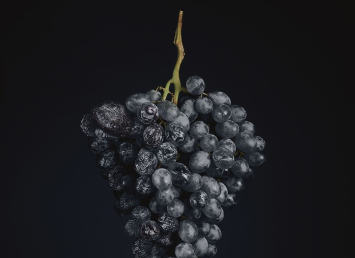 Withering grapes.
