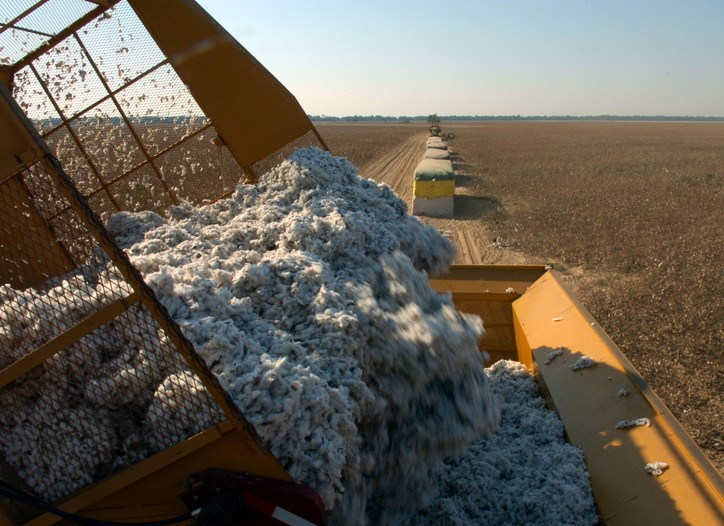 U.S. cotton production dropped to 12.6 million bales this year from 24 million bales in 2005.