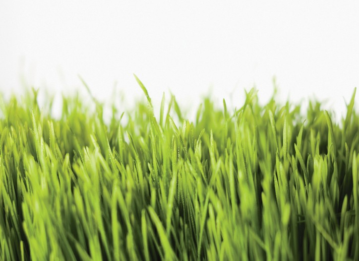 Chemists attempt to capture the scent of fresh cut grass.