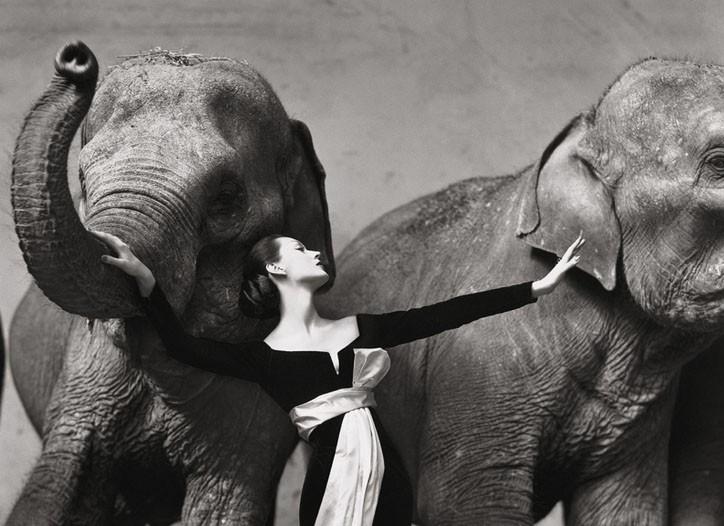 Dovima with elephants, evening dress by Dior, Cirque d'Hiver, Paris, August 1955.