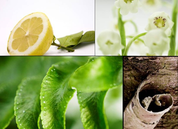 A selection of ingredients used by Givaudan in green, woody and floral notes.
