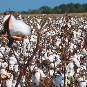 Turkey has imposed an import duty on U.S. cotton.