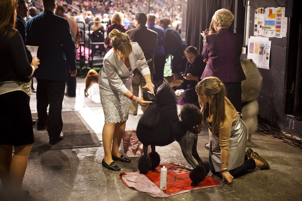 A look inside the Westminster Kennel Club Dog Show.
