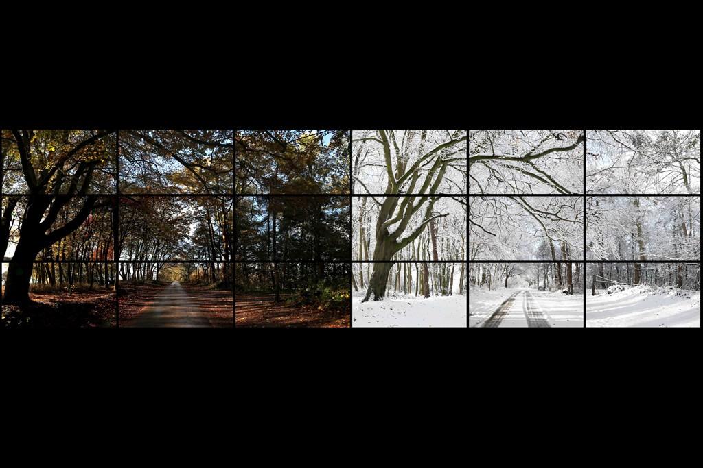 "David Hockney's ""Nov 7th, Nov 26th 2010 Woldgate Wood 11:30am and 9:30am"""