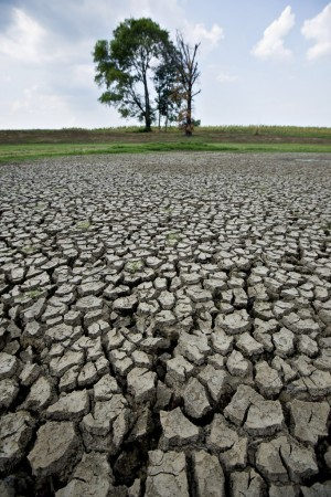 A dried-up pond in Illinois.