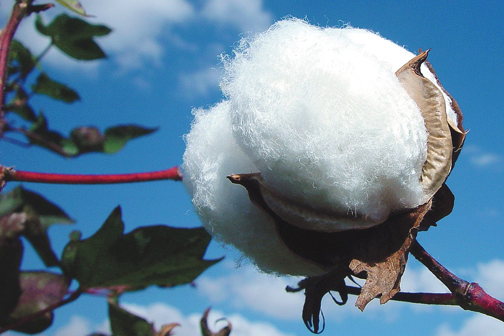 Cotton.