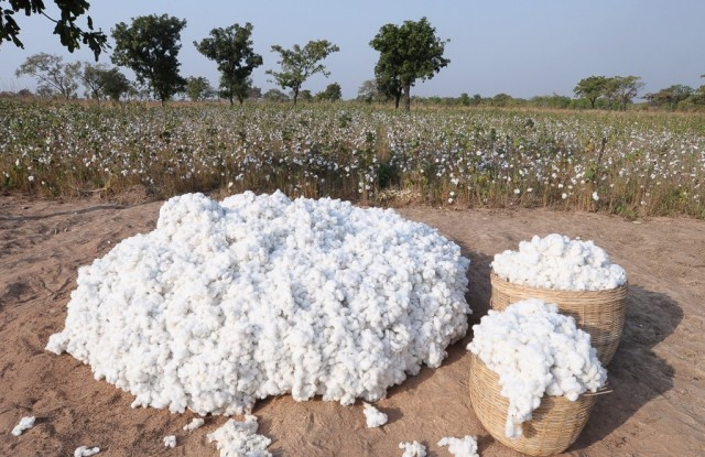 New method for cotton species testing introduced.