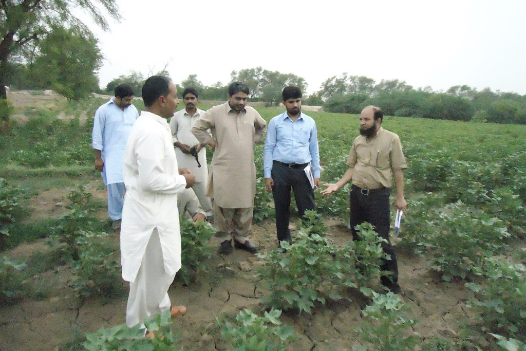 A Better Cotton supervisor visits a cotton field in Pakistan.