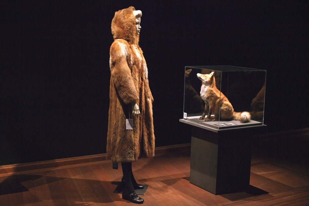 A fox fur coat faces off with a taxidermy animal.