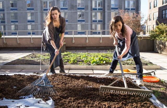 Amanda Farr and Lydia Baird drying compost at the FIT Natural Dye Garden.