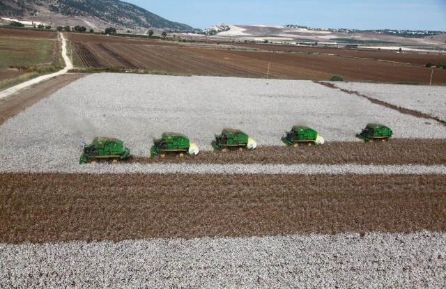 Israeli cotton farmers  joined BCI last year.