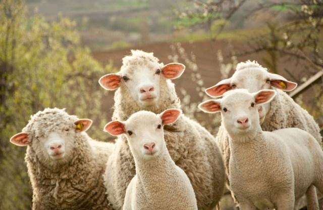 woolmark wool