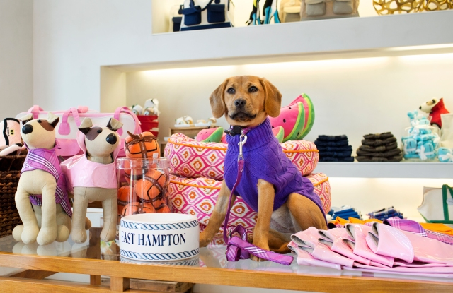 Harbor models a sweater from the Canine Styles collection available at Elie Tahari in East Hampton, N.Y.
