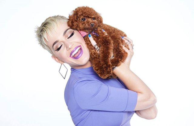 Katy Perry and her dog, Nugget, in an ad for Myer.