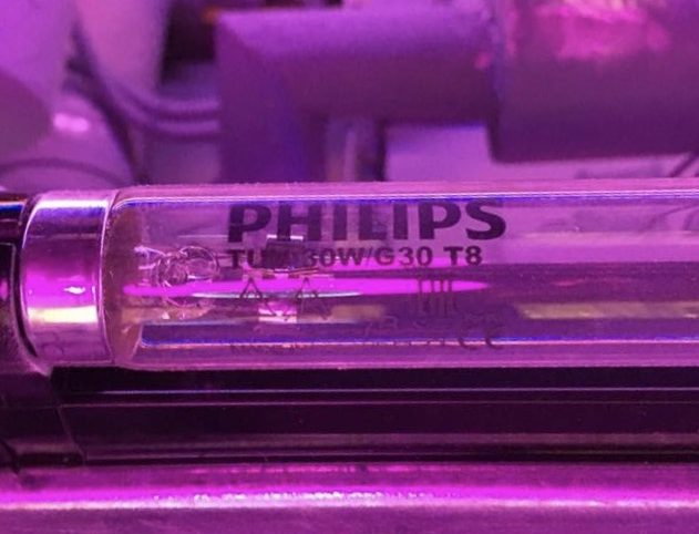 The lights were a model from Philips TUV 30W G30 T8 meant to be used for disinfecting.