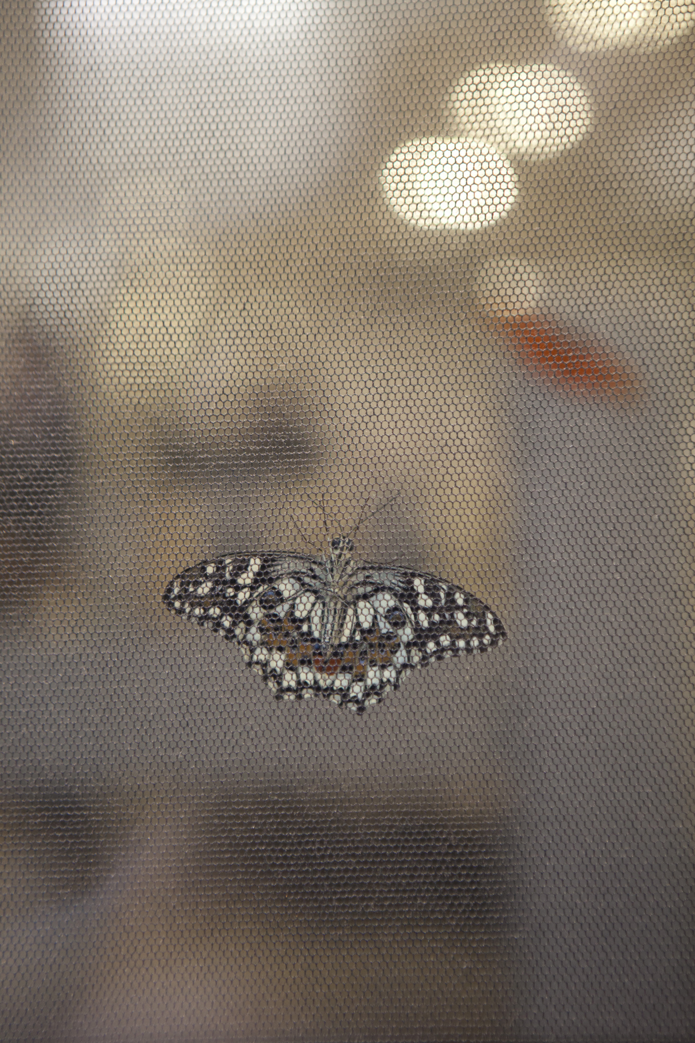 A butterfly from the storeÕs window display.