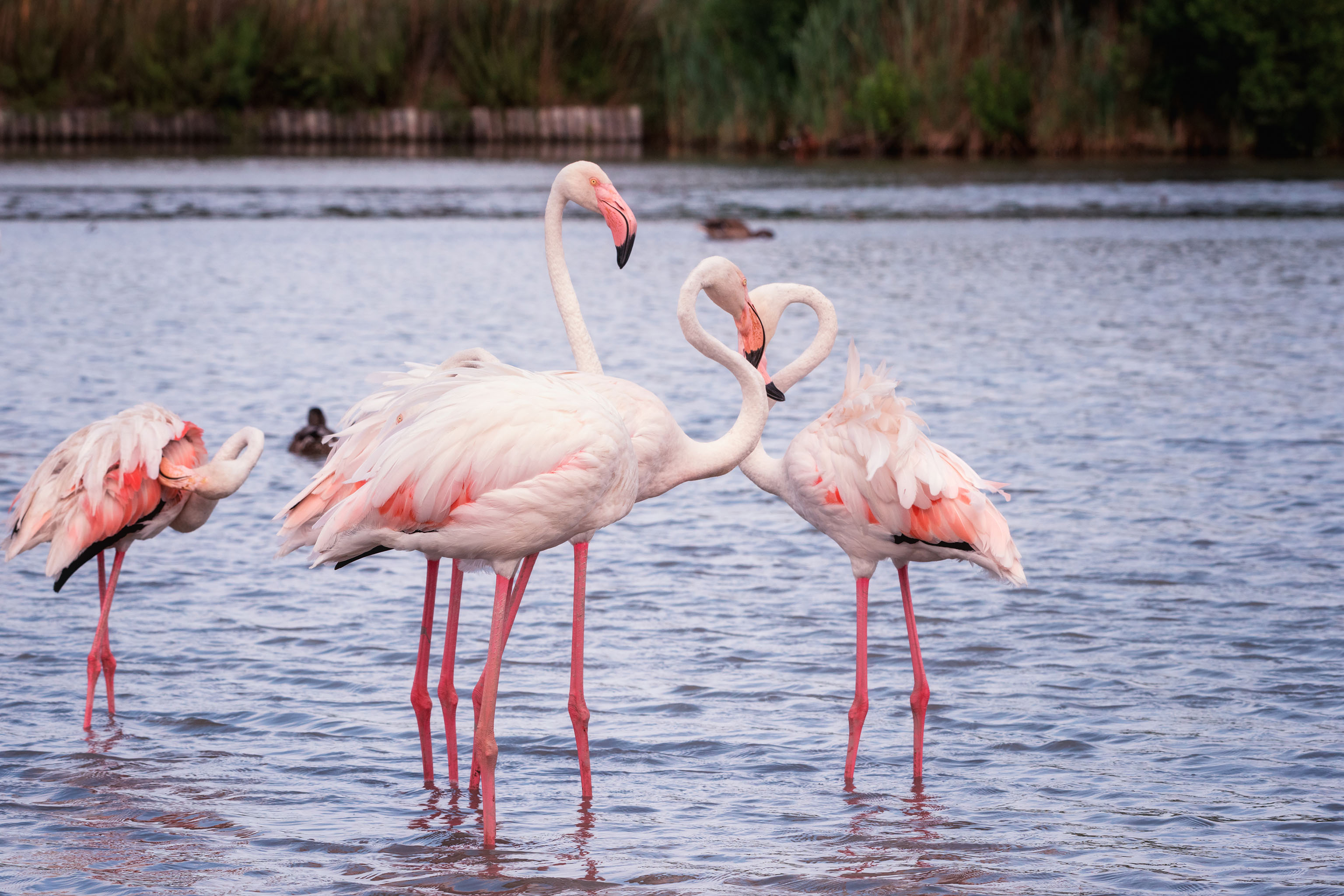 Pont de Gau bird sanctuary in Camargue.