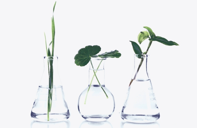 Plants in test tubes, isolated on white; Shutterstock ID 205939777