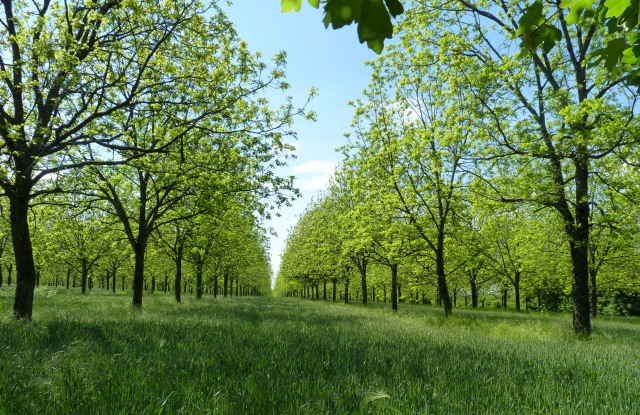 An example of agroforestry