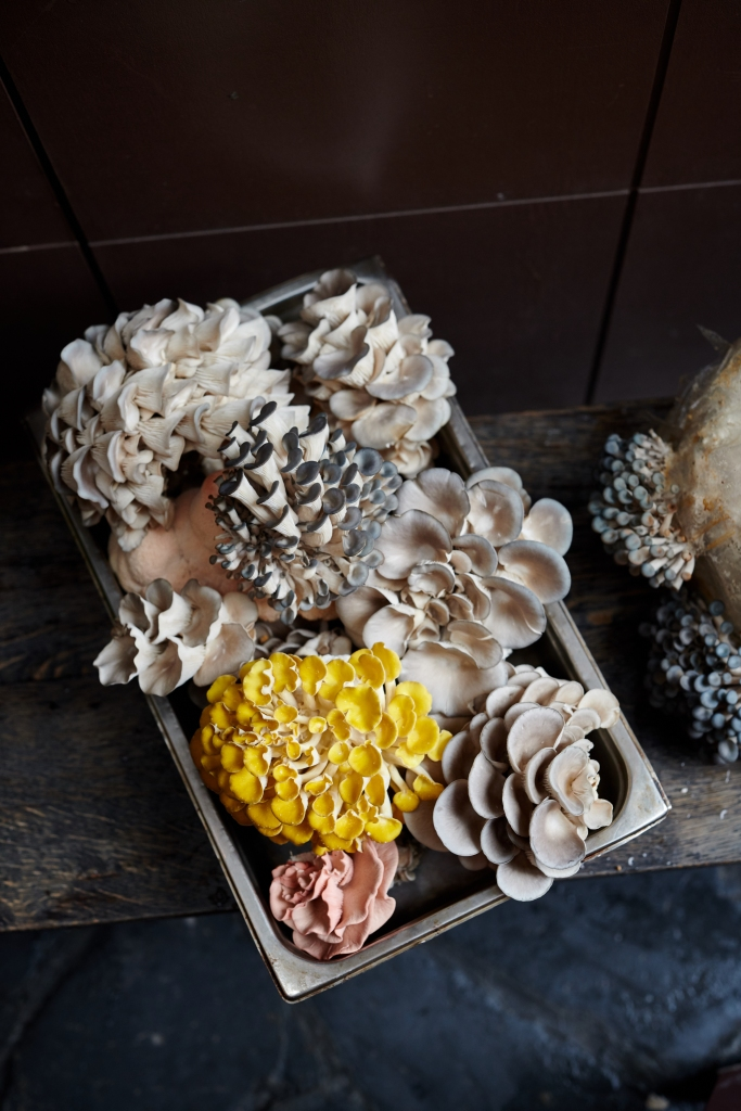 The Standard Mushrooms