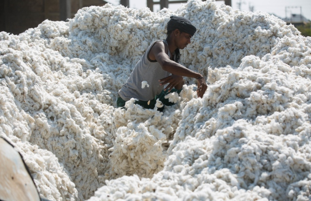 A huge pile of cotton at the cotton ginners in Madhya Pradesh, India.