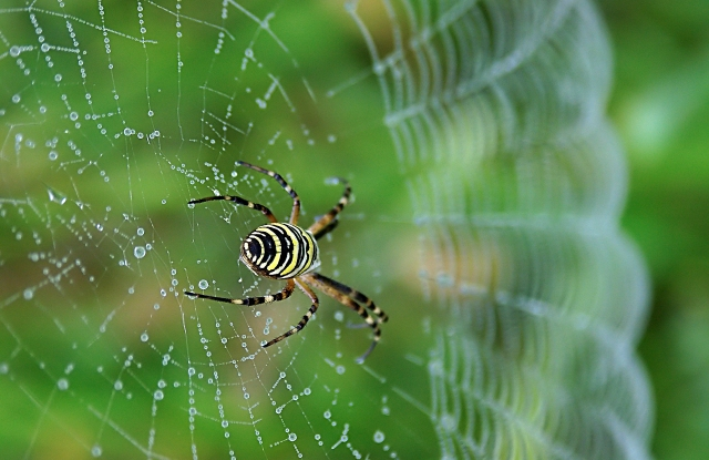 The material involves using genetically engineered spider silk technology.
