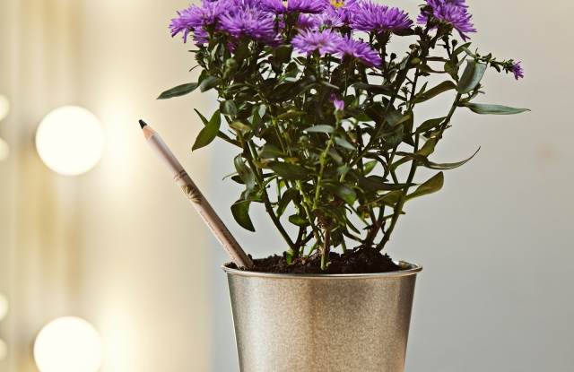 Sprout's plantable makeup pencil