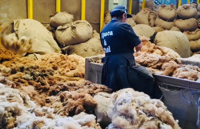 Alpaca fiber sorting at the Mitchell Group factory in Arequipa, Peru.