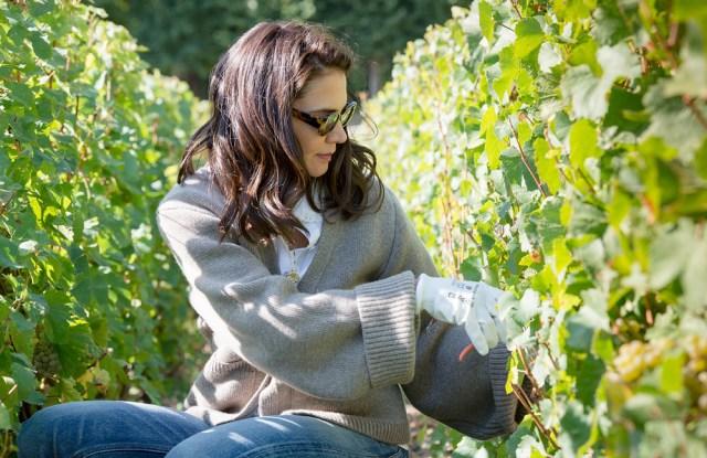 Katie Holmes harvests grapes in the Dom Pérignon vineyard.