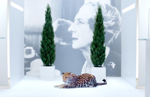 Cartier campaign image