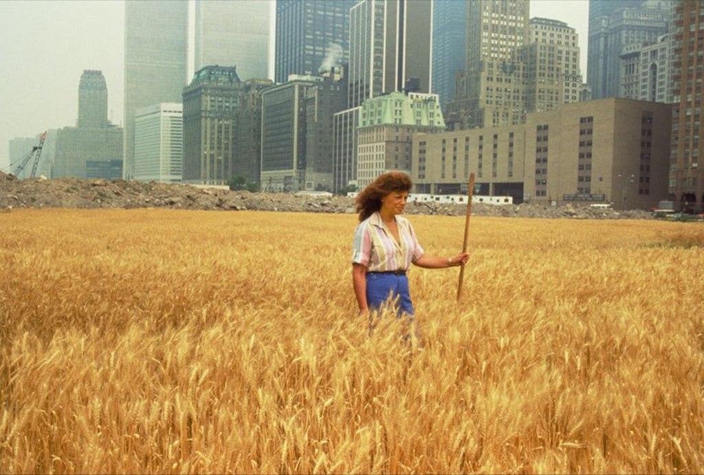"""Agnes Denes' """"Wheatfield — A Confrontation"""" project, 1982."""