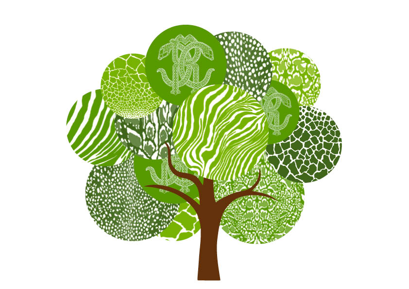 Roberto Cavalli launching a green initiative with Treedom.