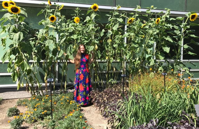 Cornell Natural Dye Garden