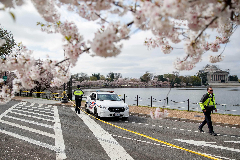 covid-19 cherry bossoms washington dc police car