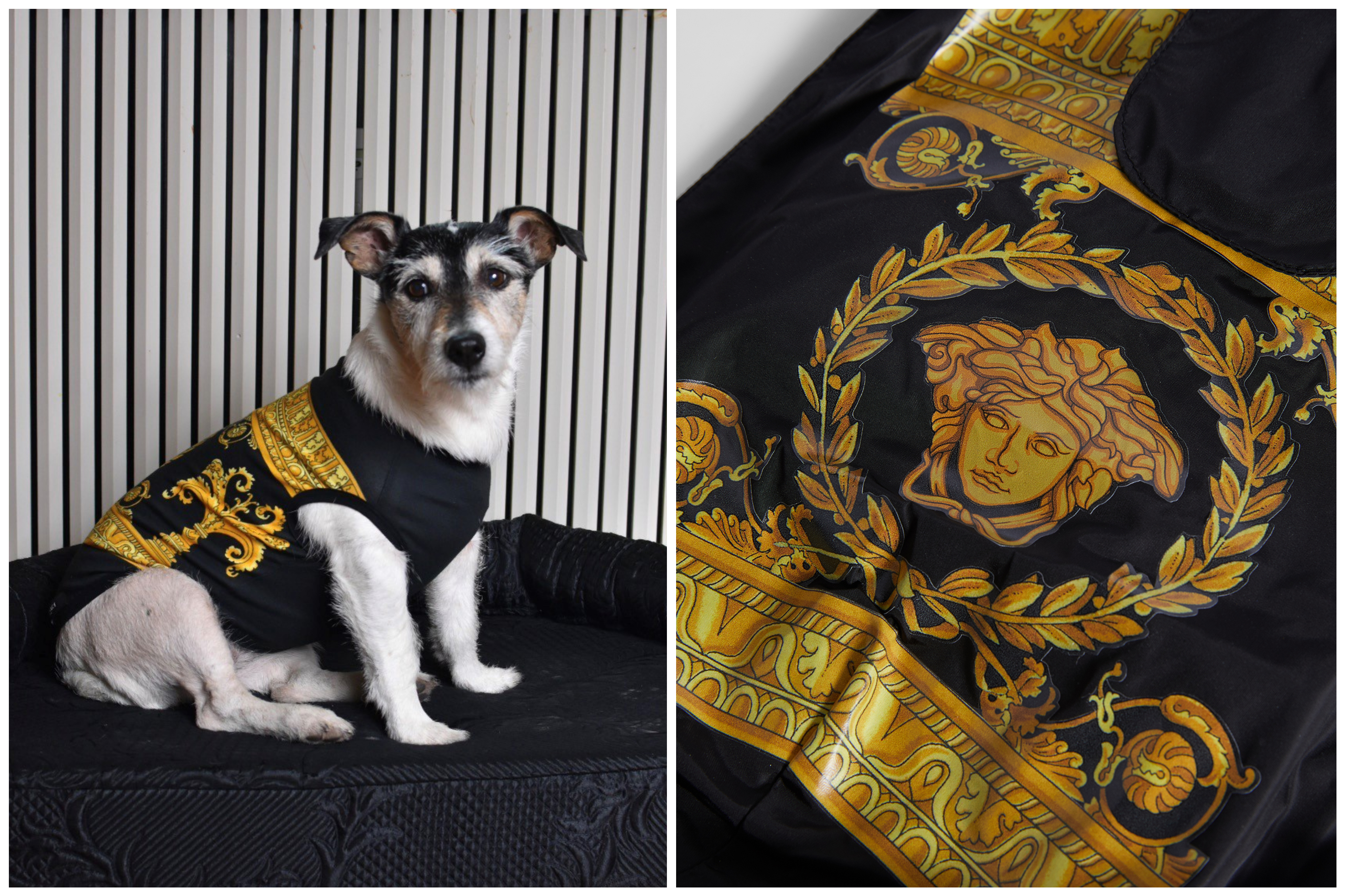 Dog Apparel