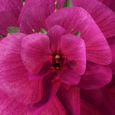 Orchid_WGSN
