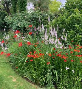 Sam McKnight's garden