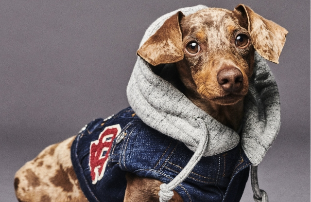 A look from the Poldo Dog Couture x Dsquared2 collection.