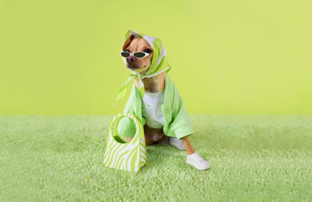 Video: Instagram's Top Dog Fashion Influencer