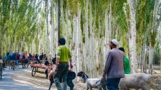 Customs Cuts Off Cotton From Xinjiang Production and Construction