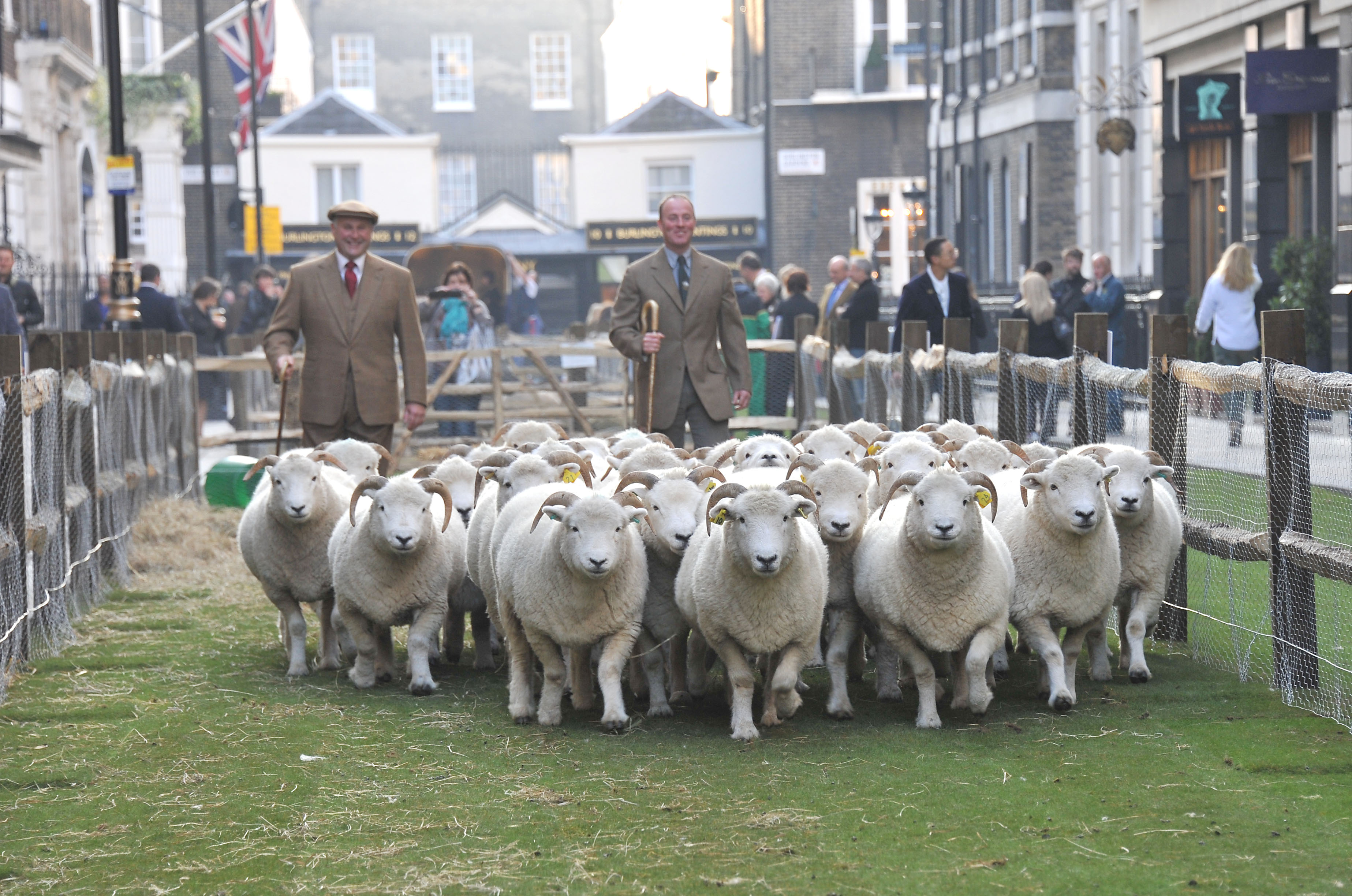 Farmers Harry Parker, Ben Blackmore Dozens of Sheep grace the Iconic Saville Row to promote the launch of Wool Week and Campaign for Wool.