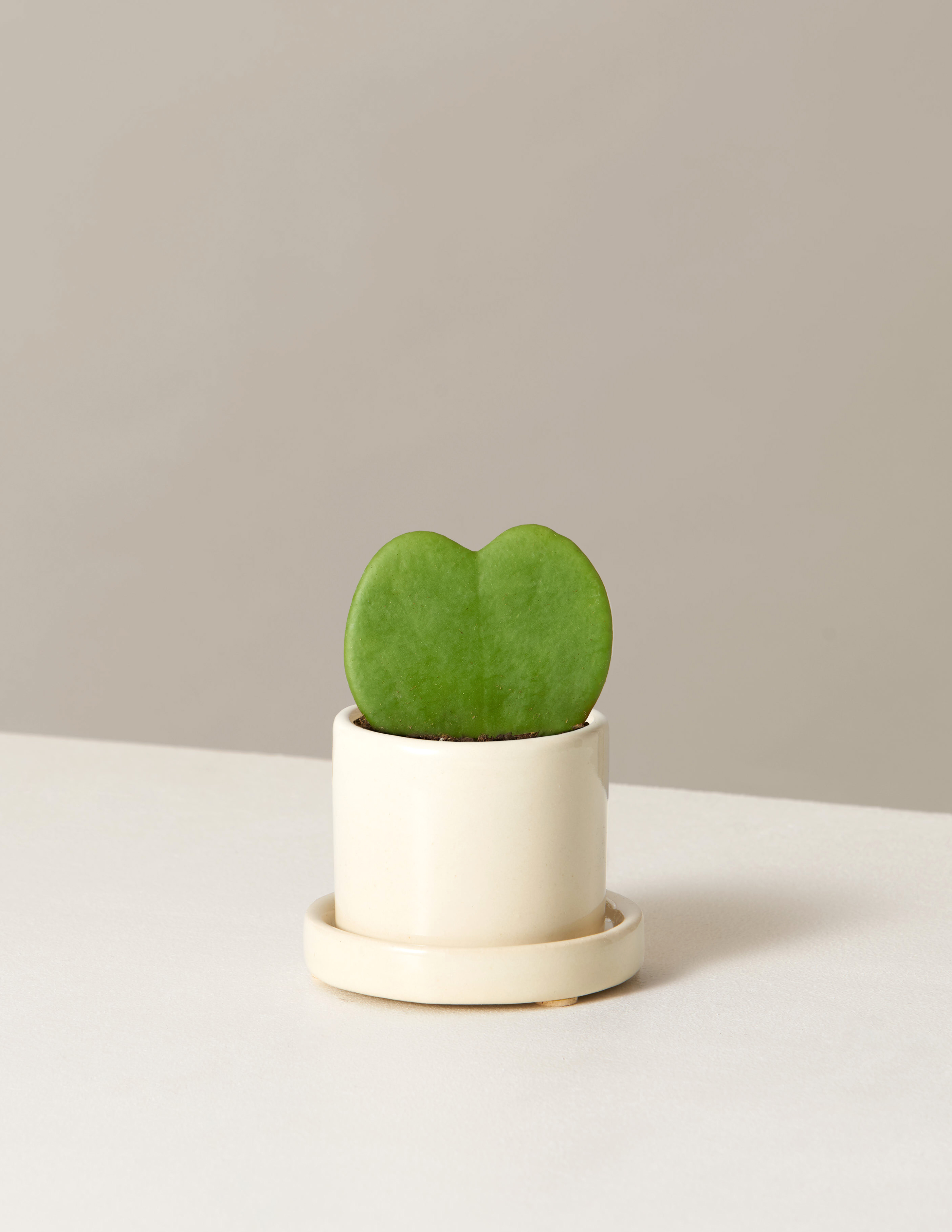 """25 Unexpected Ways To Say """"I Love You"""" this Valentine's Day, The Sill Hoya Kerrii Plant"""