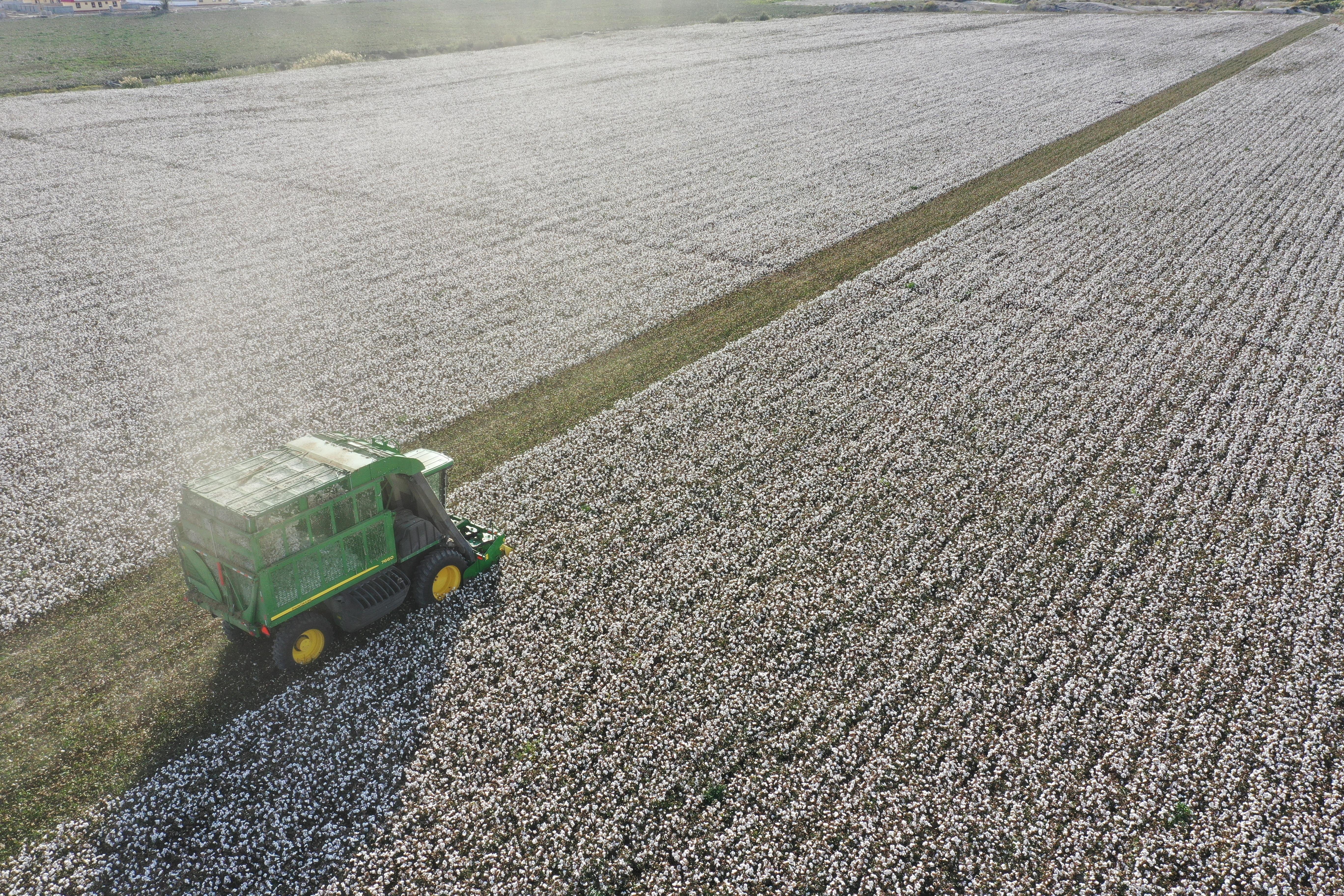 Cotton, Xinjiang, farming, government, trade, sustainability, human rights