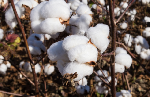 The U.S. Cotton Trust Protocol found   increased consumer spending and investment in environmentally friendly practices.