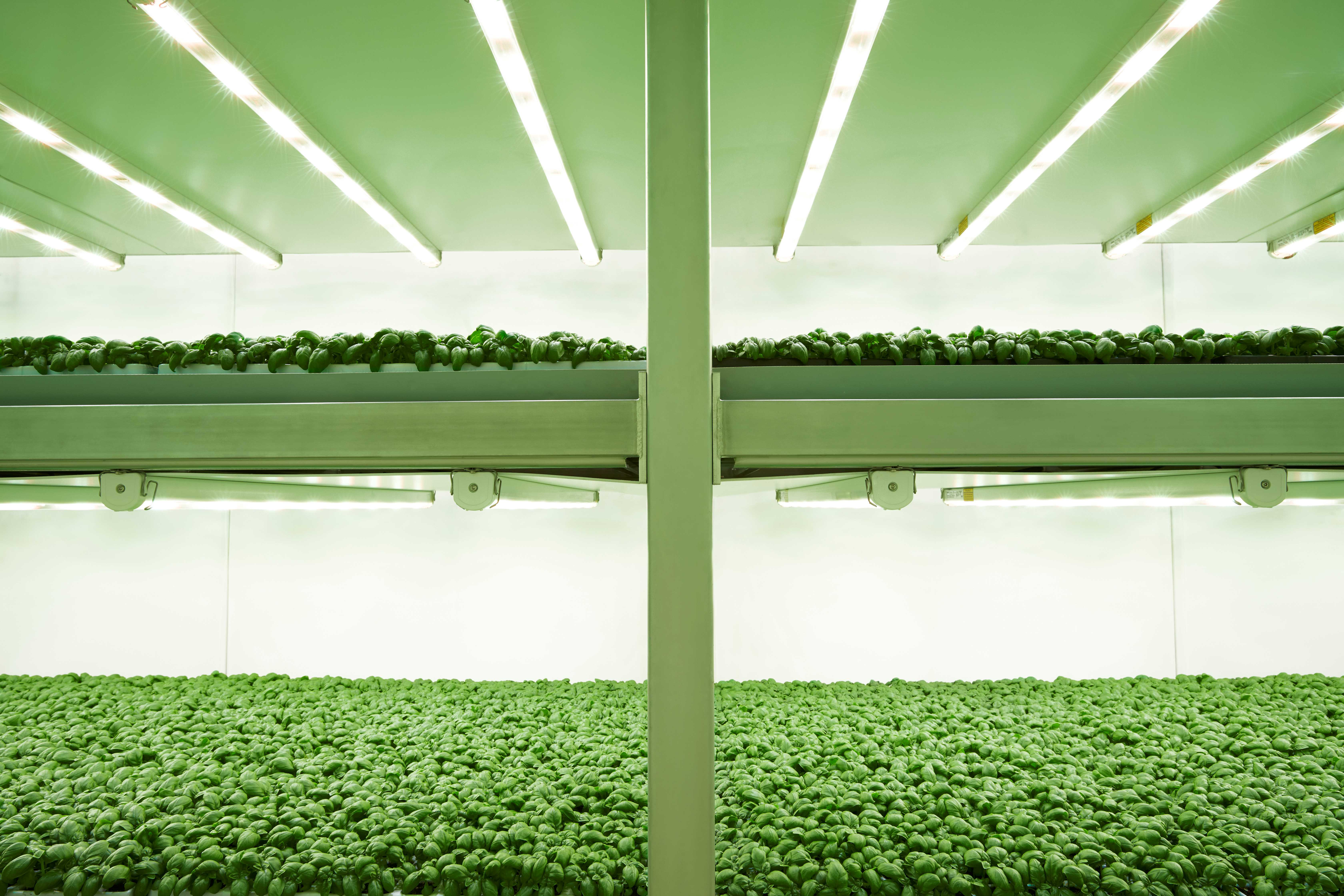 Planet Farms vertical farming system