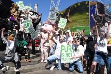 Celebrities Join Stella McCartney's Anti-fur Campaign