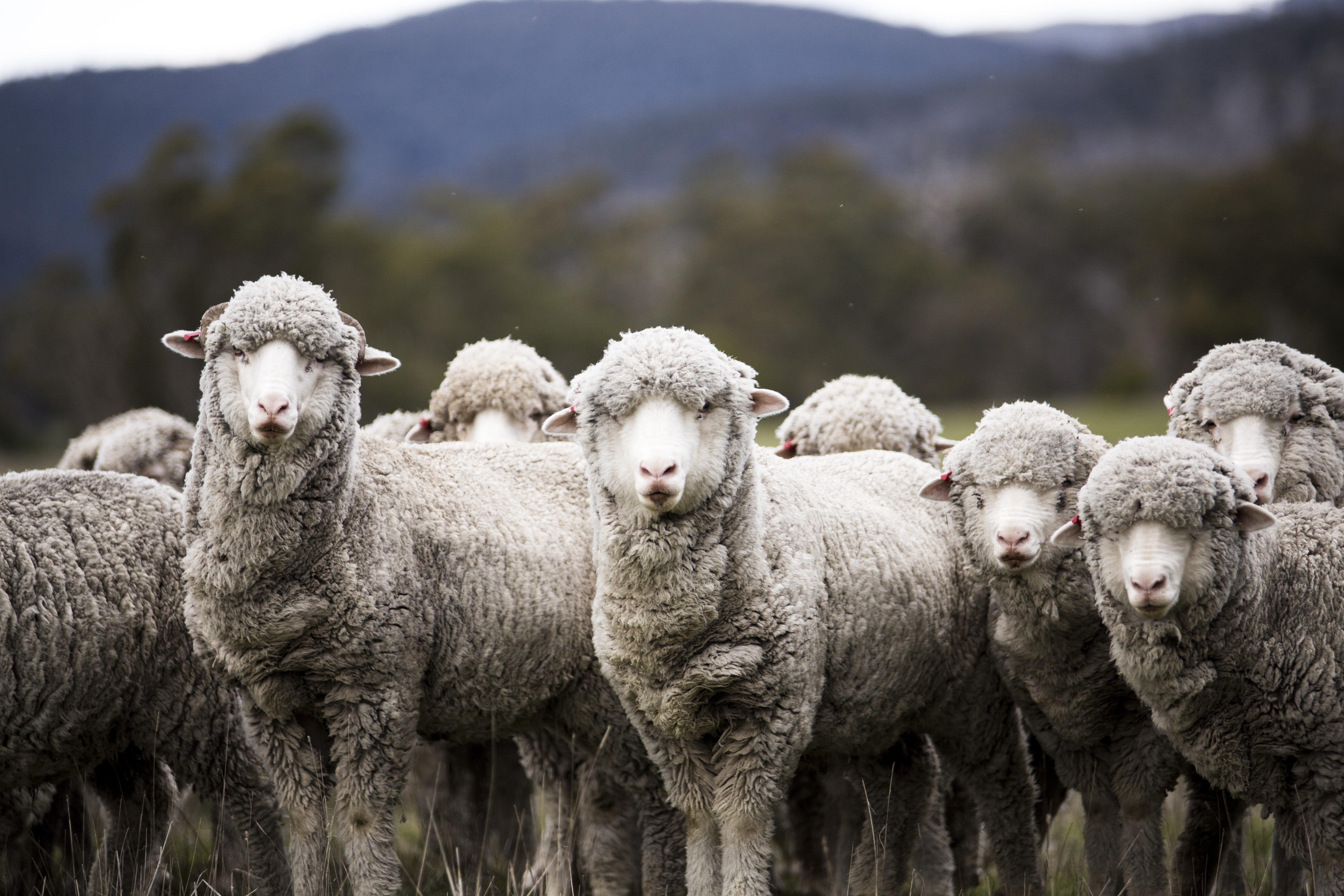 wwd.com - Tracey Meyers - Nativa, Quantis Partner for Responsibly Sourced Wool Farming Initiative